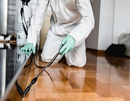 Quality Pest Control Pyrmont